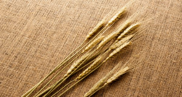 Wheat on hessian cloth